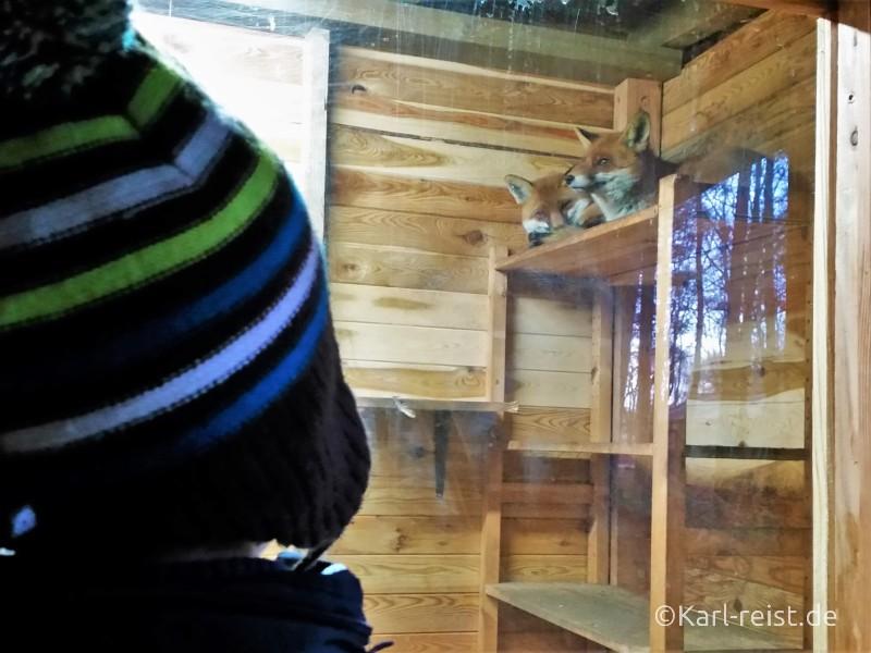 Wildpark Eekholt Füchse