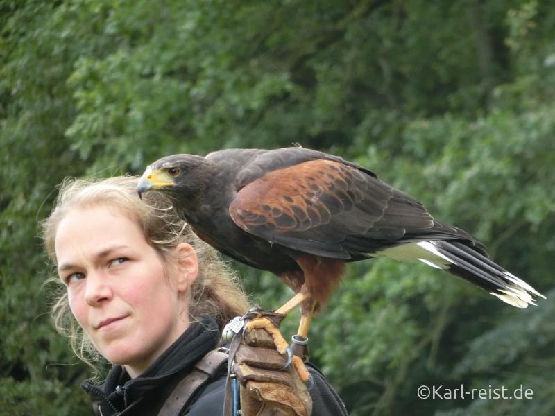 Vogelflugshow Wildpark Eekholt