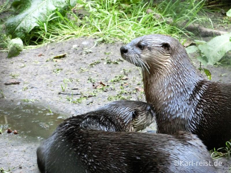 Wildpark Eekholt Otter