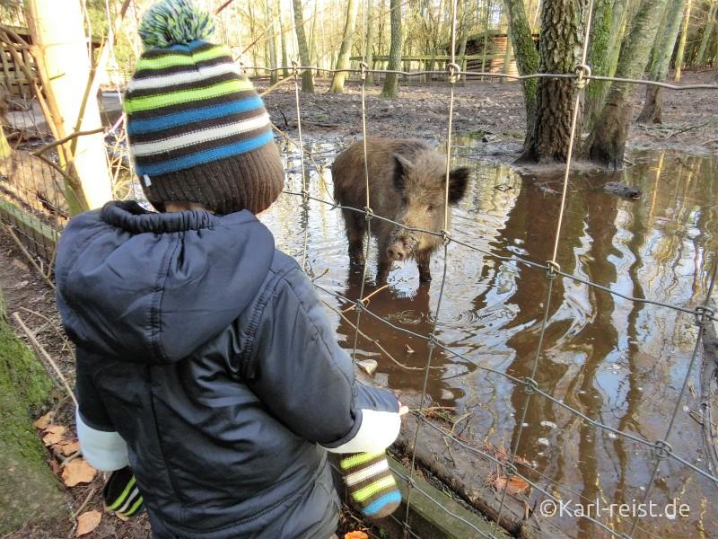 Wildpark Eekholt Wildschwein