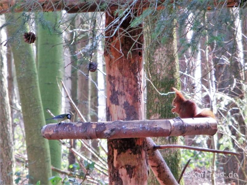 Wildpark Eekholt Eichhörnchen