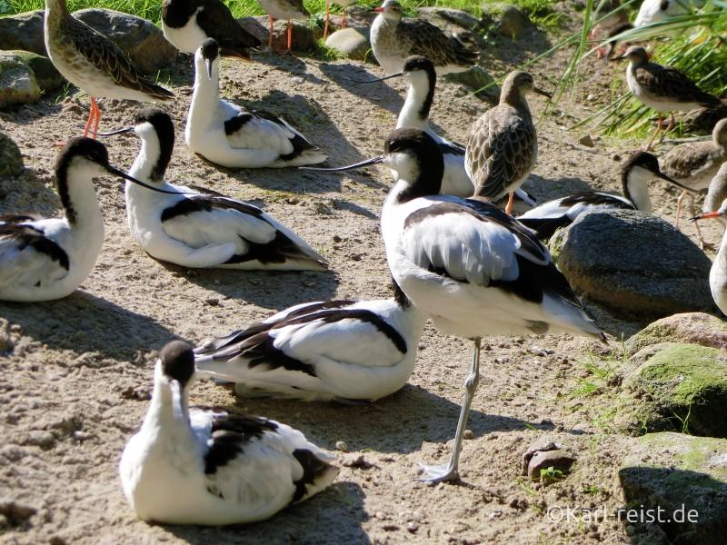 Wildpark Eekholt Wattvögel