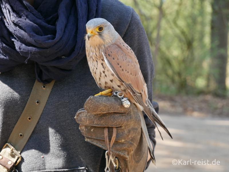 Wildpark Eekholt Greifvogel