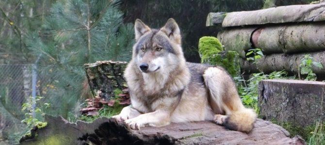 Waldwege, Wildtiere und Abenteuer im Wildpark Eekholt