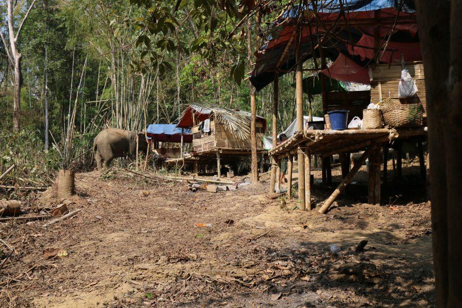 Bild Elefantencamp Myanmar Yangon Toungoo