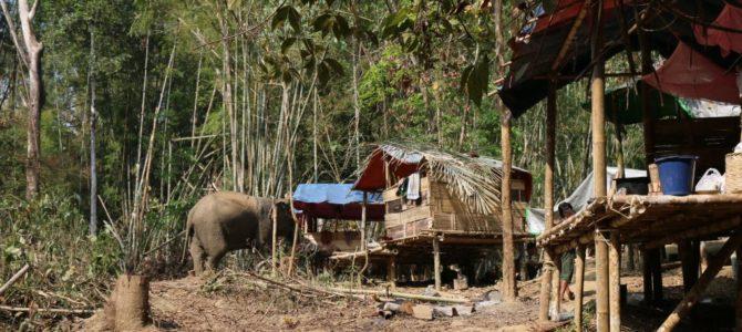 Authentisches Myanmar – Im Elefantencamp bei Yangon [Gastbeitrag]