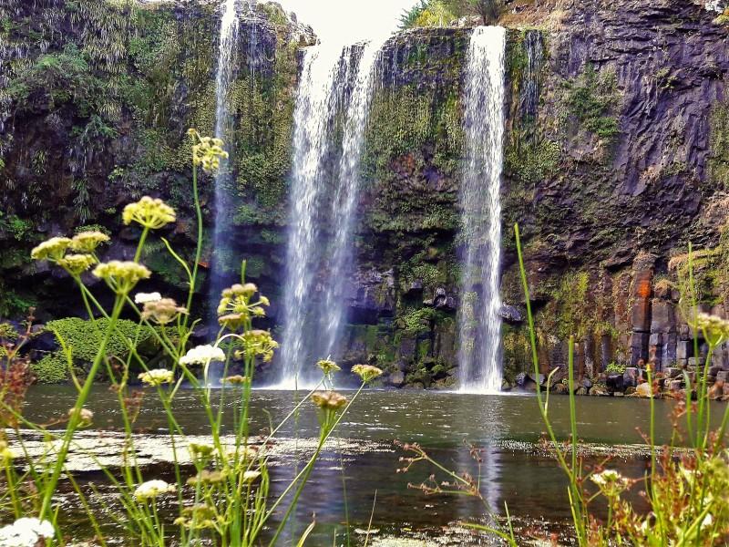Whangarei Falls Northland Neuseeland