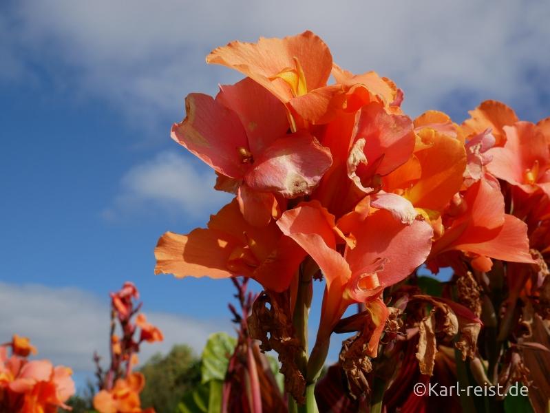 Neuseeland Nordinsel Blüten