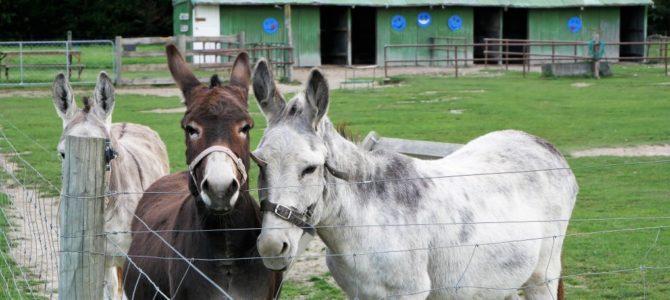 Unser Campingplatz-Tipp für Familien: Farmyard Holiday Park bei Geraldine