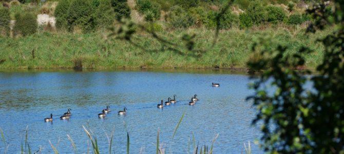 Unser Wander-Tipp in Timaru: Der Otipua Wetlands Walk
