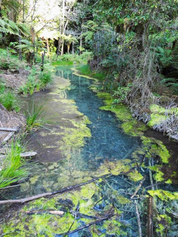 blaue Lagune im Reedwood Park in Rotorua