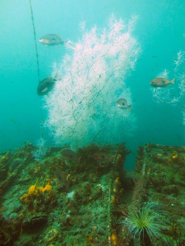Im Unterwasseraquarium im Milford Sound.