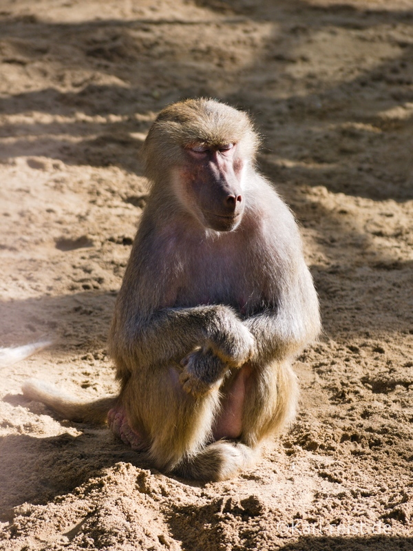 Tierpark Essehof Lehre Affengehege