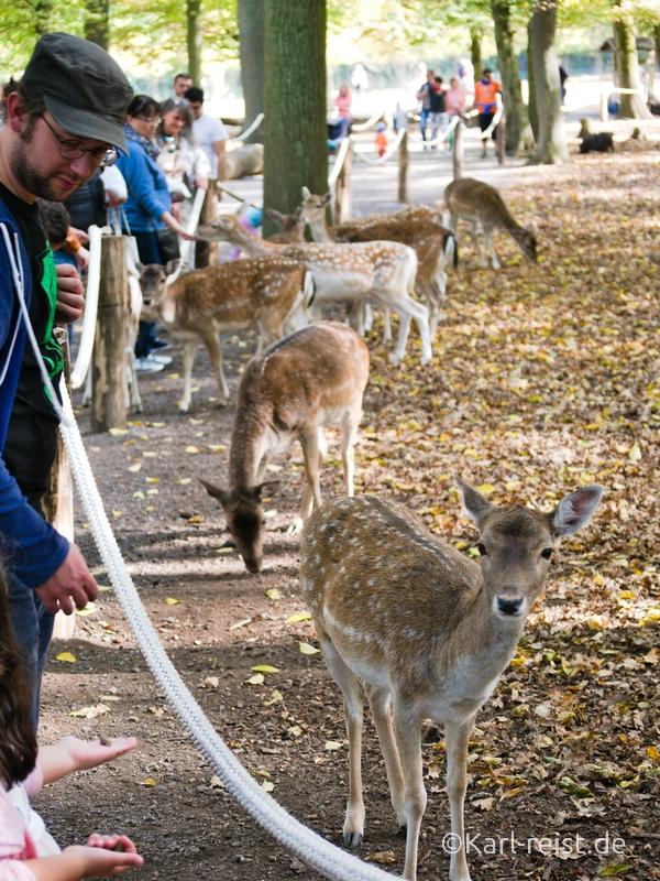 Tierpark Essehof Lehre Rehe