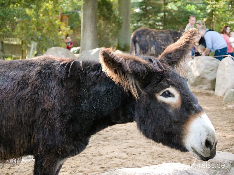 Tierpark Essehof Lehre Esel