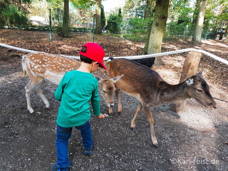 Tierpark Essehof Lehre Streichelgehege Reh