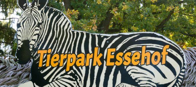 Tierische Interaktionen im Tierpark Essehof in Lehre