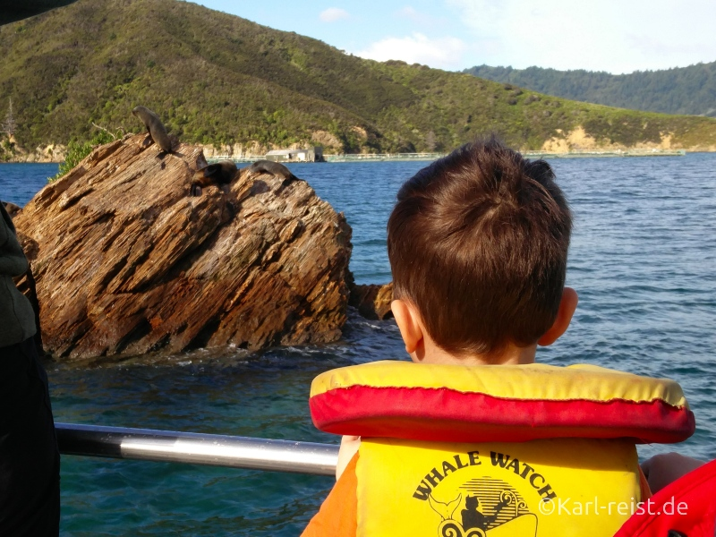 Bild Rundreise Neuseeland Südinsel 3 Wochen Picton Eco Boat Tour