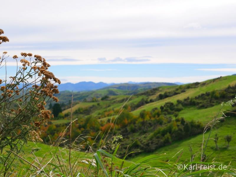 Bild Rundreise Neuseeland Südinsel 3 Wochen Kaikoura Christchurch Hinterland