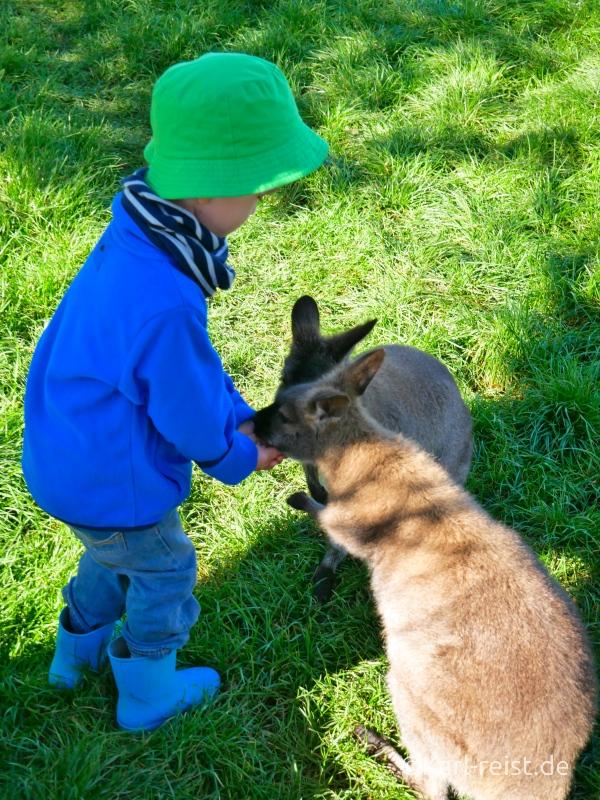 Bild Rundreise Neuseeland Südinsel 3 Wochen Wallabys Waimate