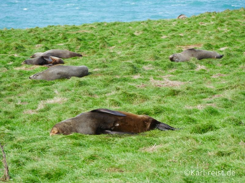Bild Rundreise Neuseeland Südinsel 3 Wochen Katiki Point