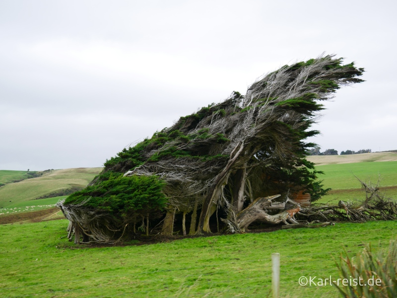 Bild Rundreise Neuseeland Südinsel 3 Wochen Slope Point Tree