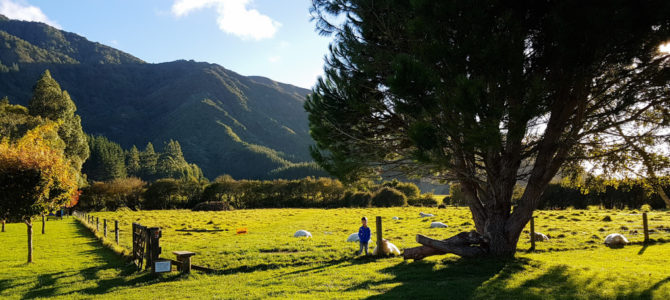 Glühwürmchen und Camping in Linkwater auf Smiths Farm Holiday Park in den Marlborough Sounds