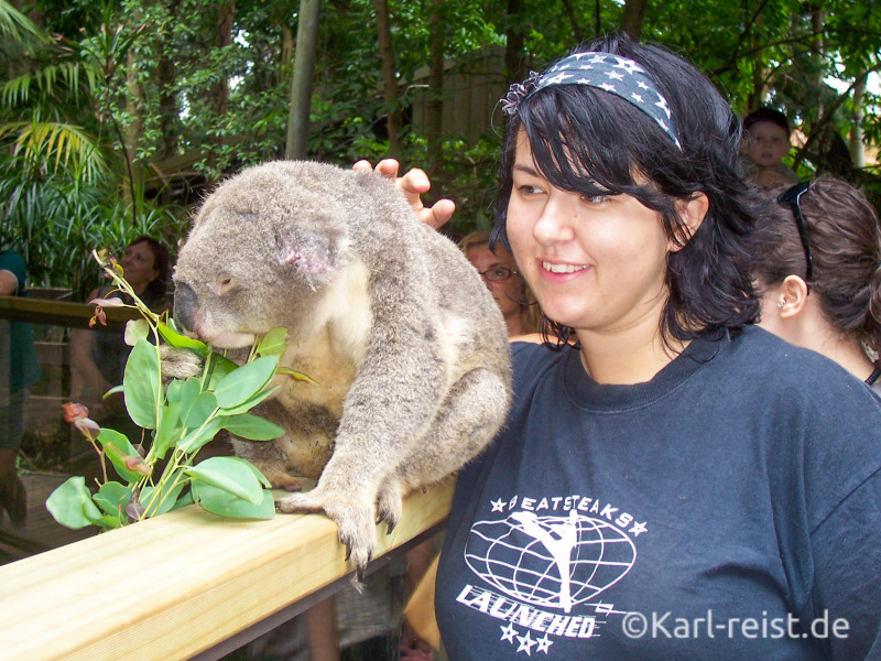Koala Australien