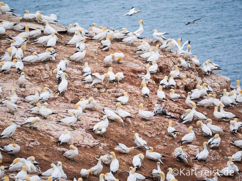 Helgoland Tagesausflug