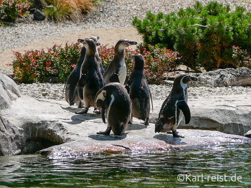 Rostock Zoo eine Gruppe Pinguine