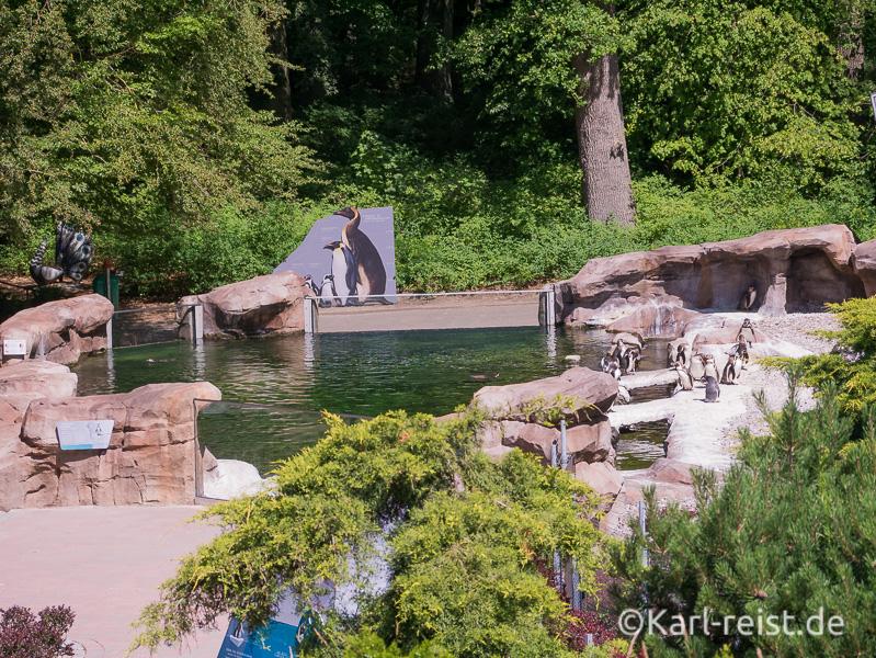 Rostock Zoo Pinguingehege
