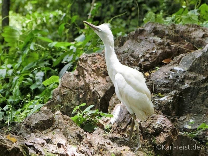 Schreitvogel im Historical Park Si Satchanalai